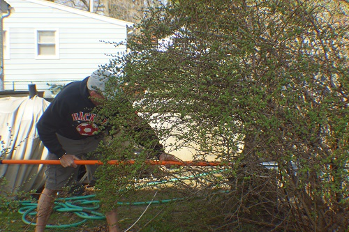 doug cutting bush