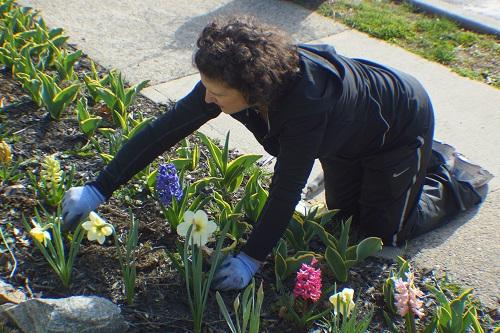 jess & flowers