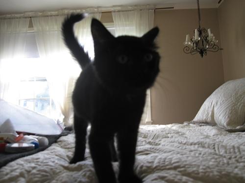 The cat, Crème de Menthe