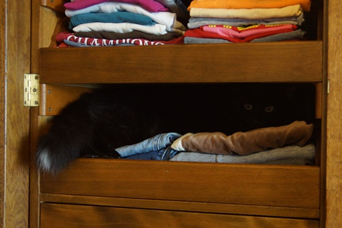 Cat in wardrobe