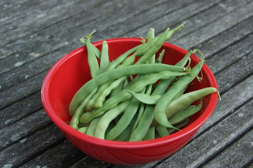 Freshly picked green beans in red bowl