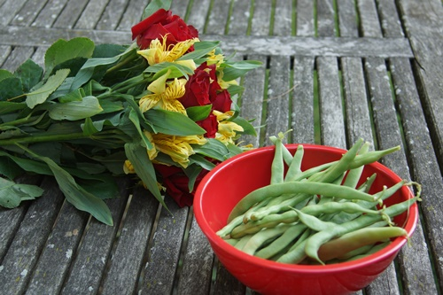 Flowers and Freshly picked green beans in red bowl